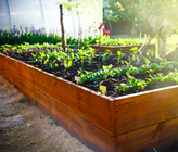 How To Grow And Maintain Your Veggie Garden