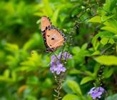 How To Attract Birds & Butterflies To Your Garden