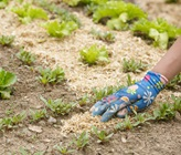 How To Choose Garden Mulch