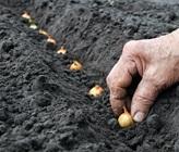 Top 10 Autumn Gardening Tips