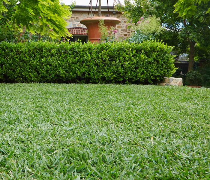 how-to-take-intensive-care-of-your-lawn