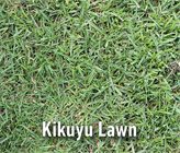 How To Find The Right Lawn For Your Backyard
