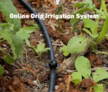 Get familiar with the benefits of drip line irrigation systems and various types of irrigation hoses to suit your garden's watering needs.