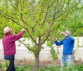 The Best Step-By-Step Guide For Pruning Roses And Fruit Trees