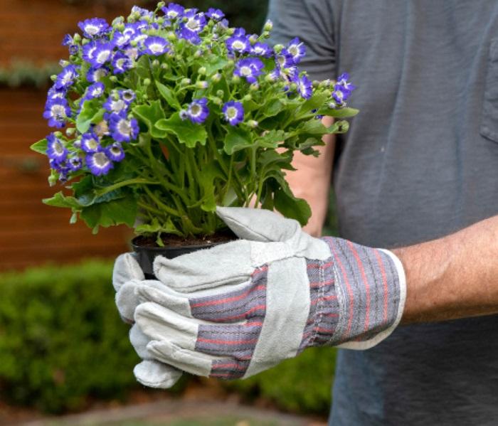 Handy Work gloves