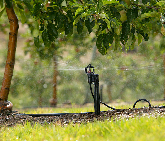 Micro Sprinkler 7 - Permanent Crop Application