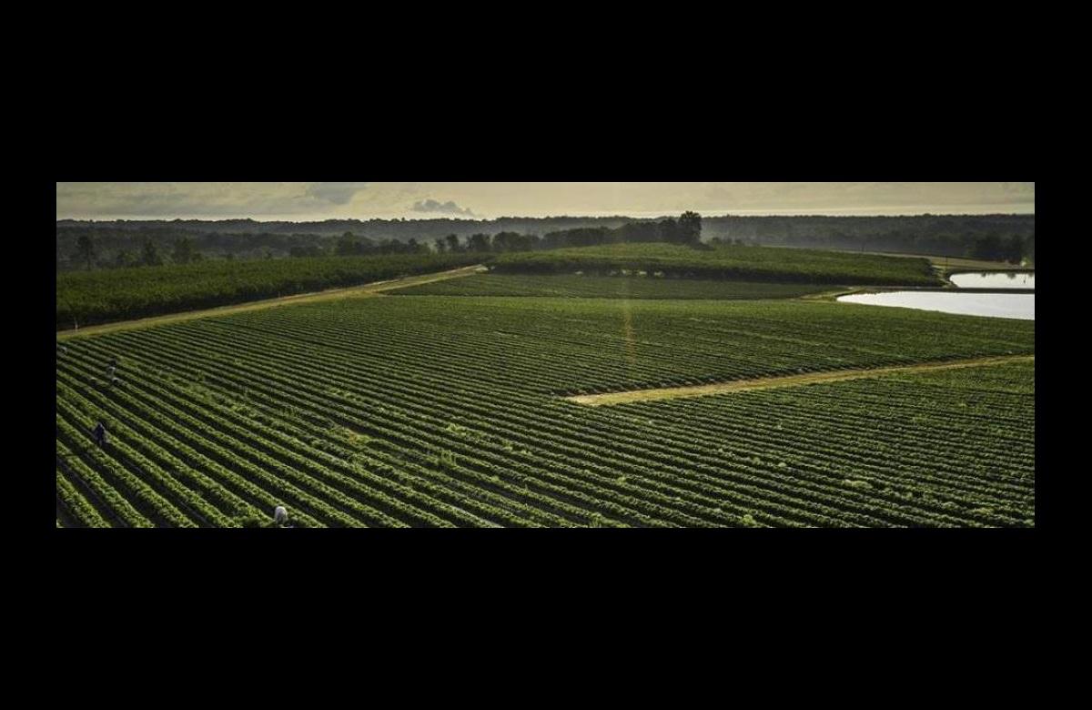 Sistemas de riego por goteo para agricultura de Toro