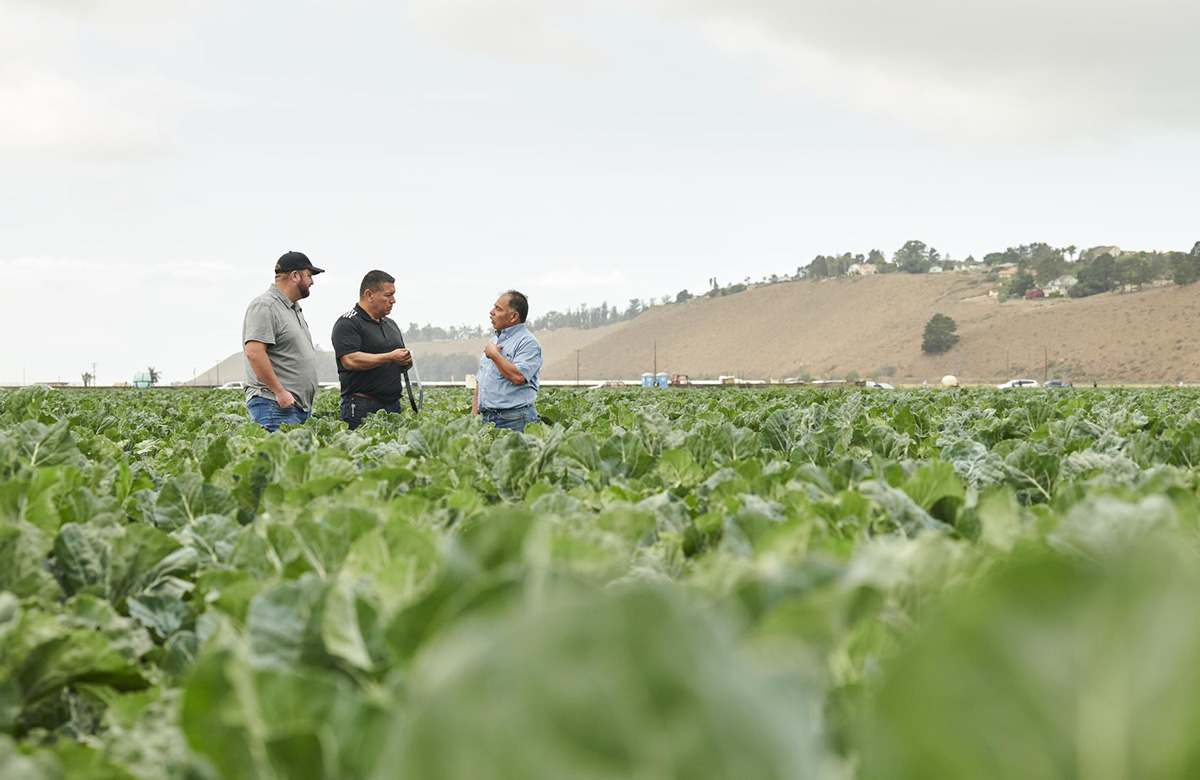 Toro Ag Resources for Drip Irrigation Systems in Agriculture and Greenhouse